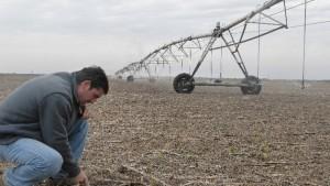"""Agricultura: el """"Big Data"""", clave para ajustar los pronósticos y ahorrar mucha plata"""